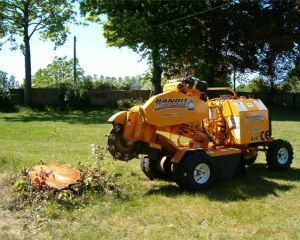 Specialist Tree Stump Grinder
