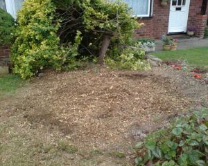 Whats left after tree stump grinding
